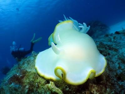 水納島はピカピカの透明度♪♪_a0156273_17482171.jpg