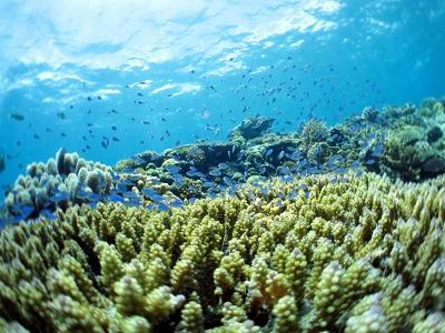 水納島はピカピカの透明度♪♪_a0156273_17485674.jpg