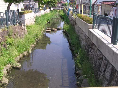 多摩川周辺で見たこと_f0211178_1518476.jpg
