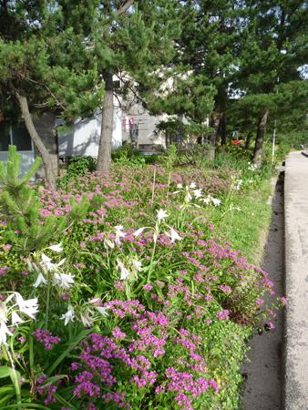 兵庫県佐津海岸で海水浴_e0173183_17575335.jpg