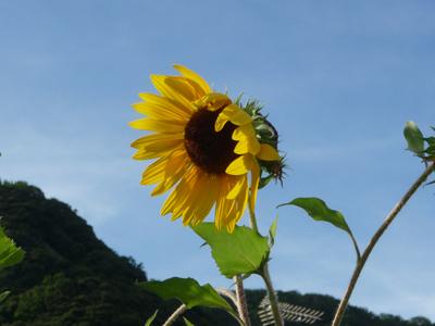兵庫県佐津海岸で海水浴_e0173183_1758754.jpg