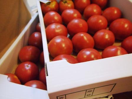 美味しいトマトの季節です_e0167593_0251035.jpg