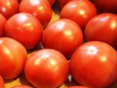 美味しいトマトの季節です_e0167593_0255279.jpg