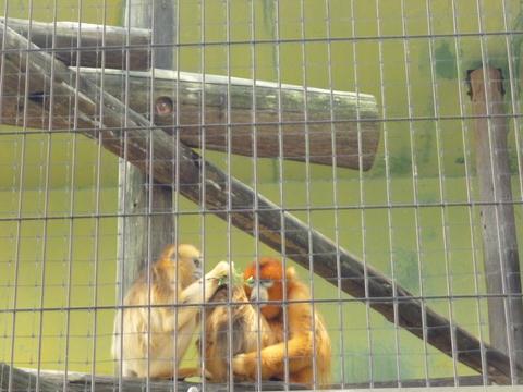 夏の動植物園♪_b0228113_1835540.jpg