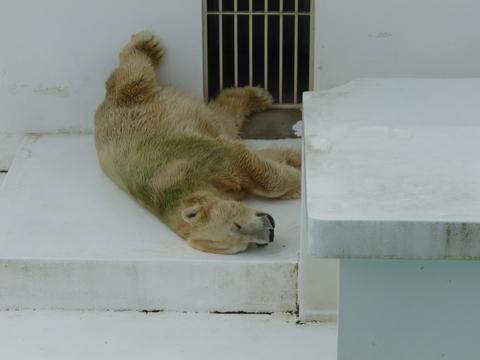 夏の動植物園♪_b0228113_185313.jpg