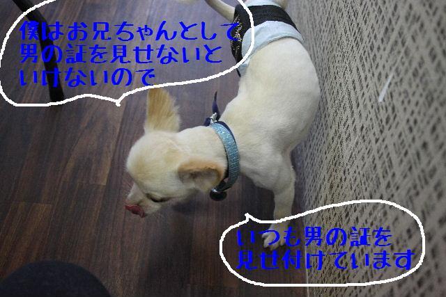 b0130018_11561697.jpg