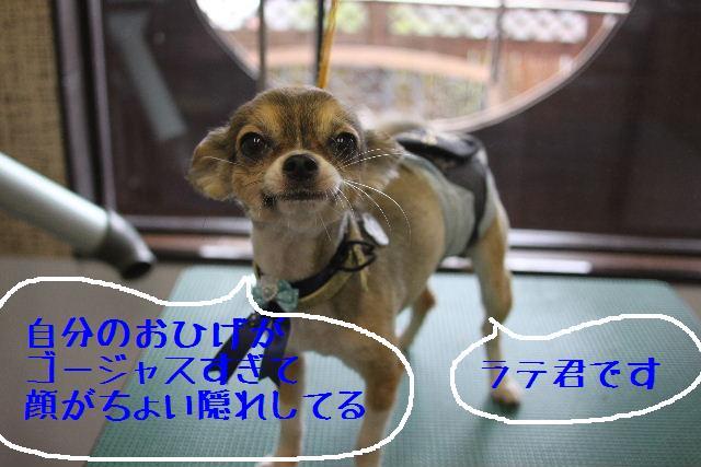 b0130018_1156941.jpg