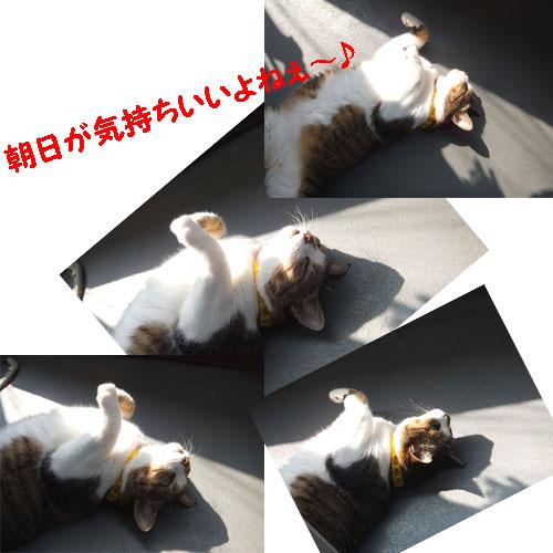 f0032418_934361.jpg