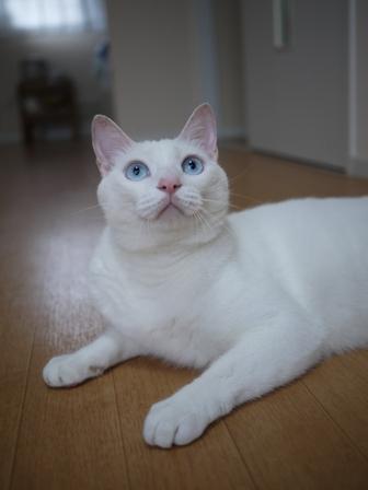 猫のお友だち vieくん編。_a0143140_017262.jpg