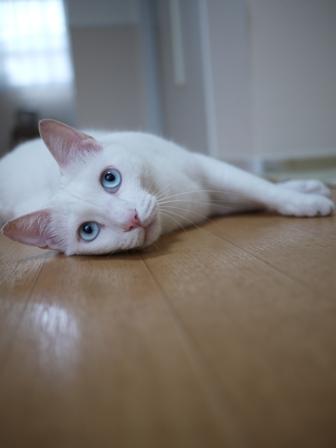 猫のお友だち vieくん編。_a0143140_0214110.jpg