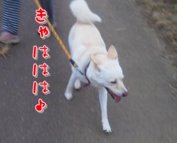 f0195543_20125146.jpg