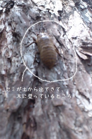 Bioマルシェ 2日目_e0254750_2118156.jpg