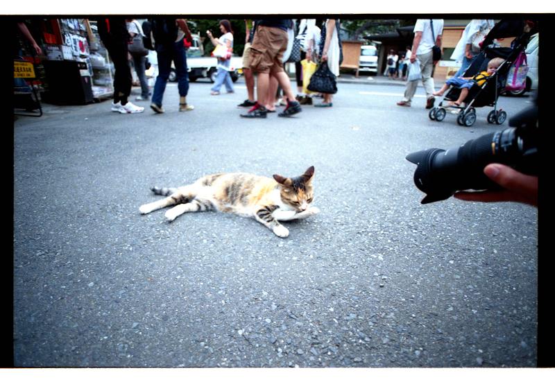 #12-116   鎌倉のアイドル猫_b0065572_13285294.jpg