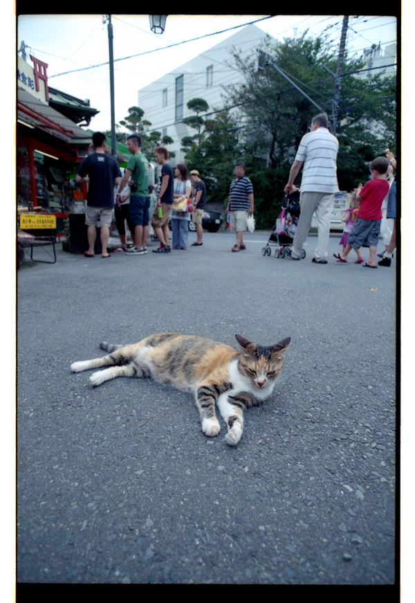#12-116   鎌倉のアイドル猫_b0065572_1329694.jpg