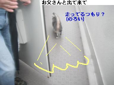 b0112380_10255979.jpg