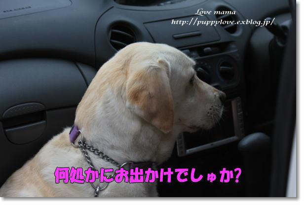 b0136683_9524374.jpg