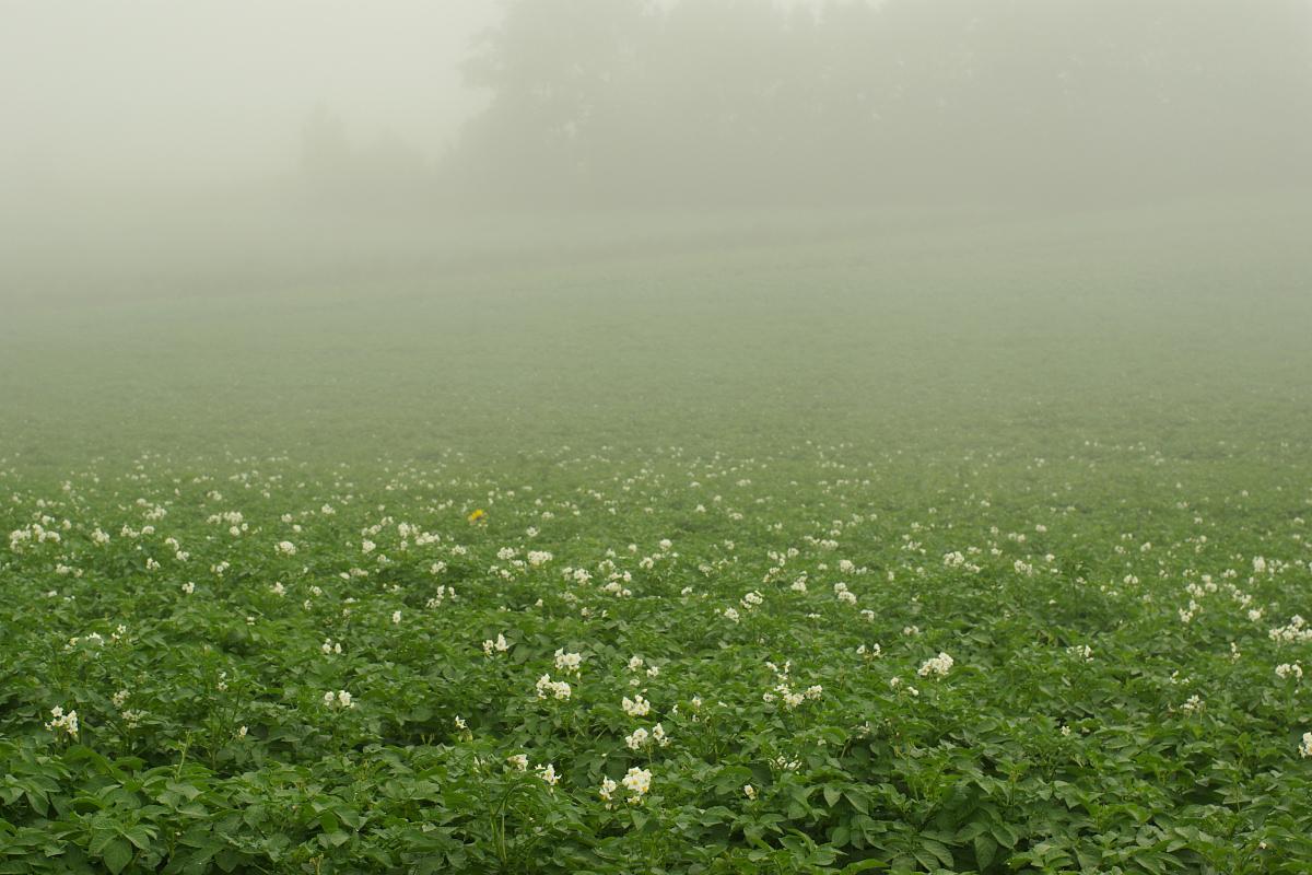 霧に走る_e0051186_1917166.jpg