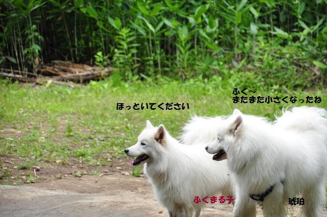 f0212597_21492232.jpg