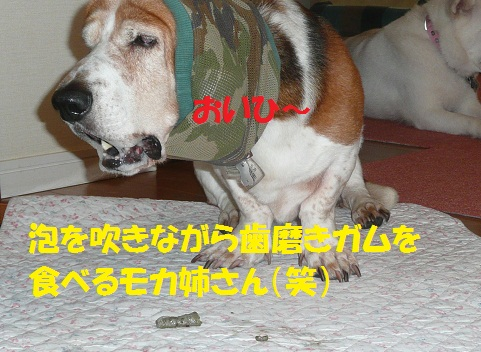 f0121712_1250151.jpg