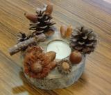 [ レポート ]  『 第11回 ふるさと岡山の森を訪ねる旅 』_b0211845_11374633.jpg