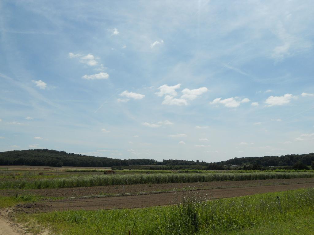 パリ郊外の農園で_a0066869_17333496.jpg