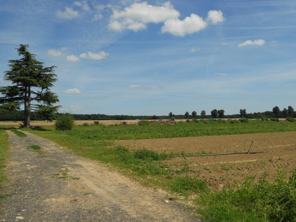 パリ郊外の農園で_a0066869_17505469.jpg