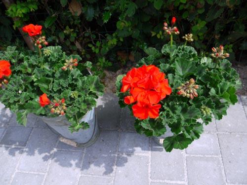 来客があるといいですね・・・・・お家がきれいになります・・花の力もすごい!!_b0137969_14384595.jpg