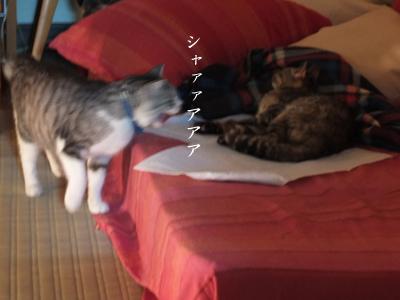 怒りジャンプ_a0180681_14502652.jpg