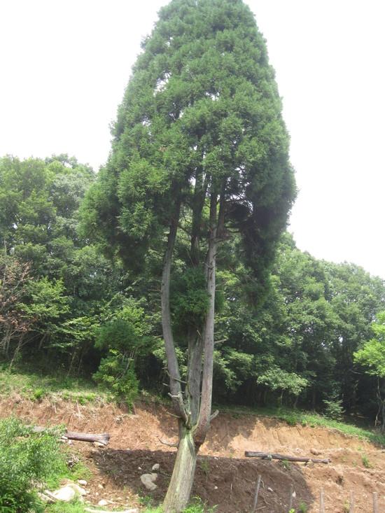 「greengreenvillage日田」へ~「災害の爪痕」は??_a0125419_7535436.jpg