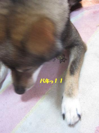 f0143123_19551524.jpg