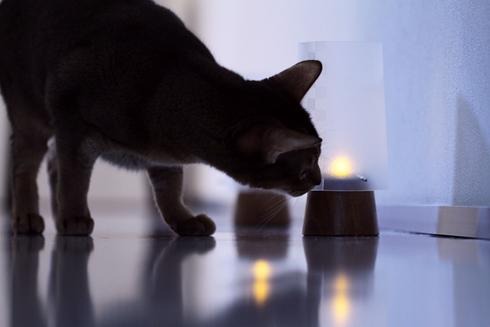 [猫的]念入り確認_e0090124_23391639.jpg