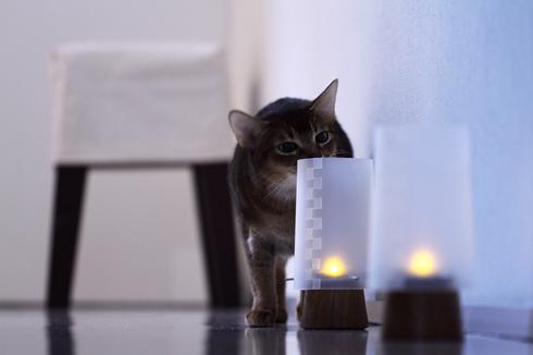 [猫的]至近確認_e0090124_7155168.jpg