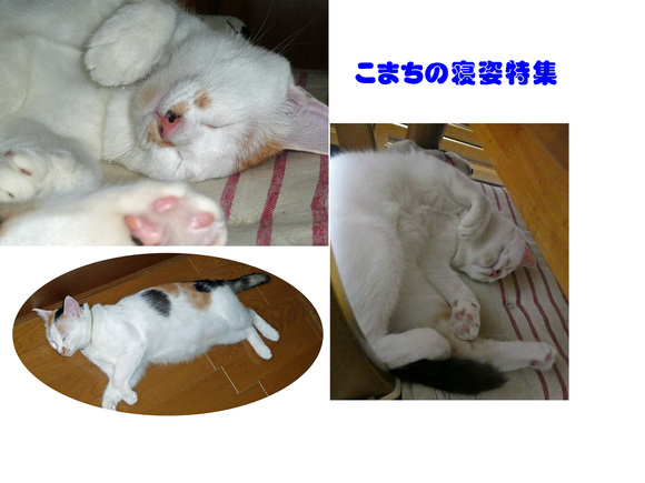 a0278632_1701411.jpg