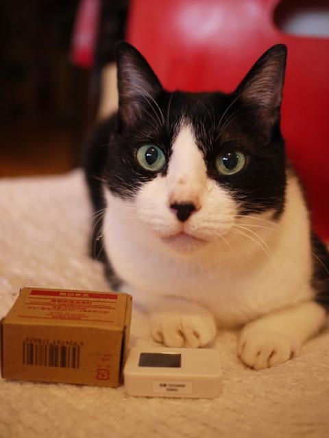 無印良品携帯用温湿度計猫 空編。_a0143140_202535100.jpg