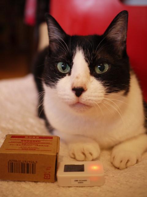 無印良品携帯用温湿度計猫 空編。_a0143140_20354669.jpg
