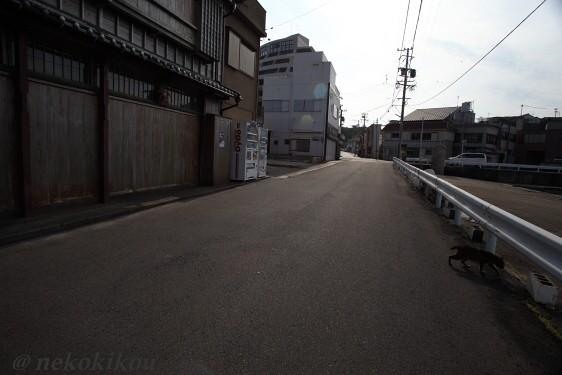 志摩で空振り?_b0138848_0152131.jpg
