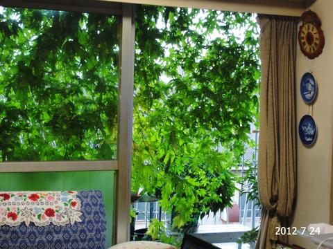 いとしのグリーンカーテン。。。_e0116563_19581571.jpg