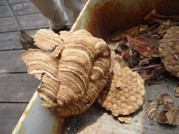 蜂の巣と頂き物_a0199979_15174294.jpg