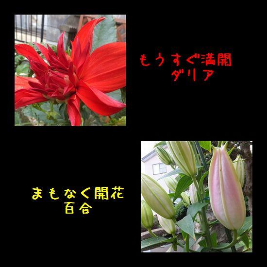 e0234881_222502.jpg