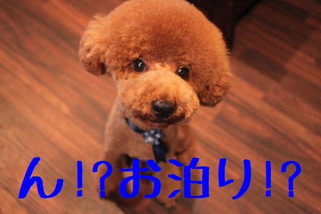 b0130018_2355867.jpg