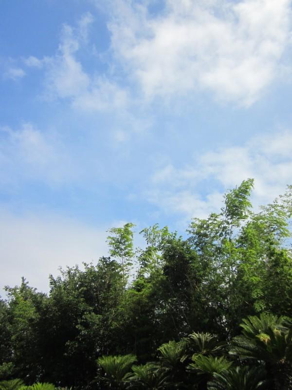 2012  Summer            ~ @ 南伊豆_d0103566_14115619.jpg