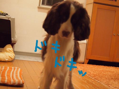 b0204977_804043.jpg