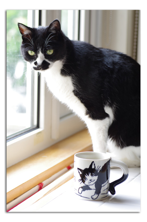 猫マグ_a0136878_16113883.jpg