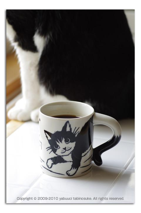 猫マグ_a0136878_1611599.jpg