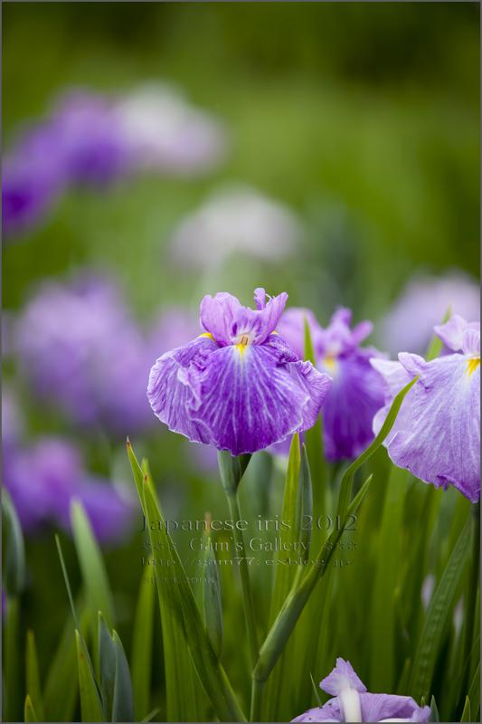 紫音_f0195893_19533676.jpg
