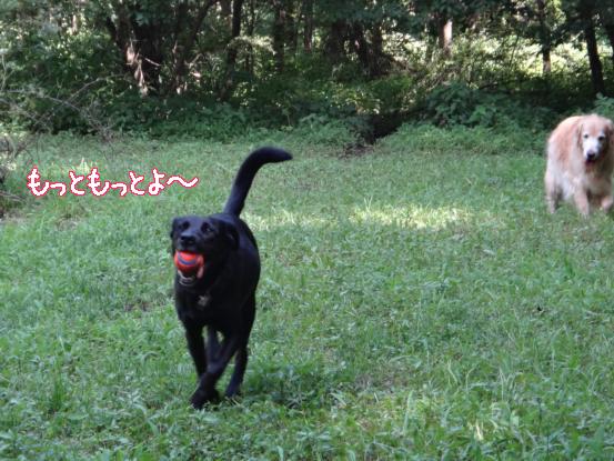 f0064906_2012668.jpg