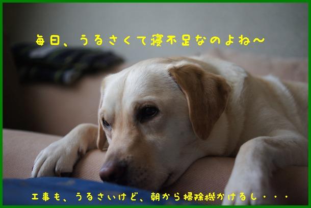 d0250709_1725386.jpg