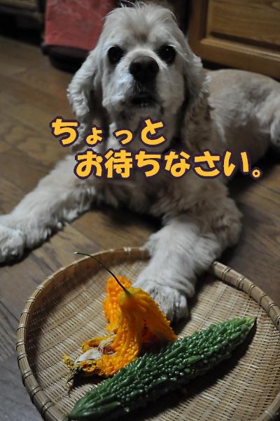 b0067012_002139.jpg