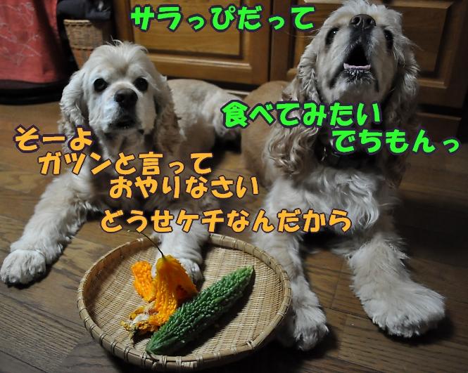 b0067012_044568.jpg