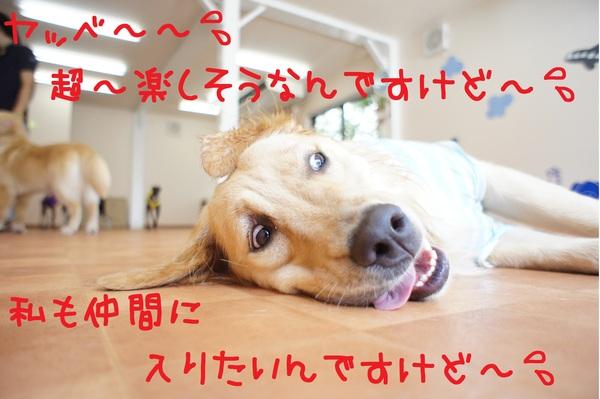 d0220513_16124176.jpg